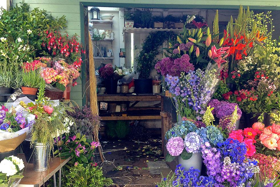 Flowers outside