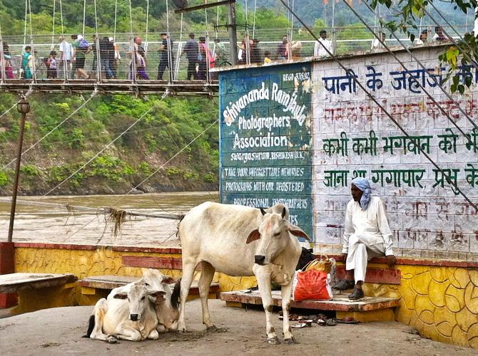 Ram-Jhula-bridge--Rishikesh